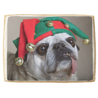 Funny looking pug with tongue hanging out shortbread cookie