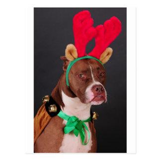 Funny looking reindeer postcard