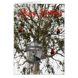 Funny Lorikeets And Cat In Role Reversal, Birthday Card