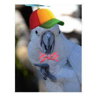Funny Maquaw Postcard
