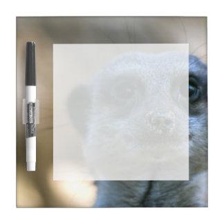 Funny Meerkat Dry-Erase Board