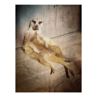 Funny Meerkat Sitting with Back to Wall, Grunge Poster