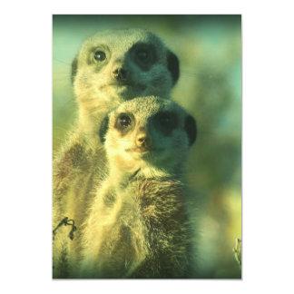 Funny meerkats 5x7 paper invitation card