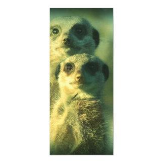 Funny meerkats 4x9.25 paper invitation card