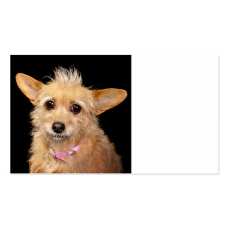 Funny Mohawk Dog Business Card