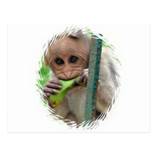 Funny Monkey Picture Postcard