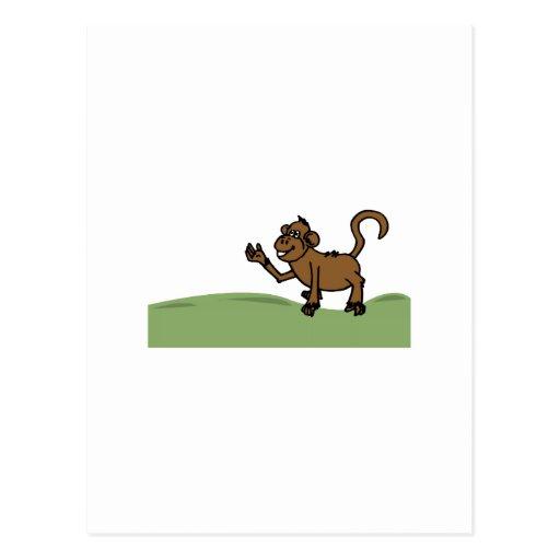 Funny Monkey Post Card