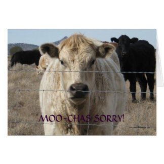 Funny Moo Black White Cow Apology - Ranch or Farm Greeting Card