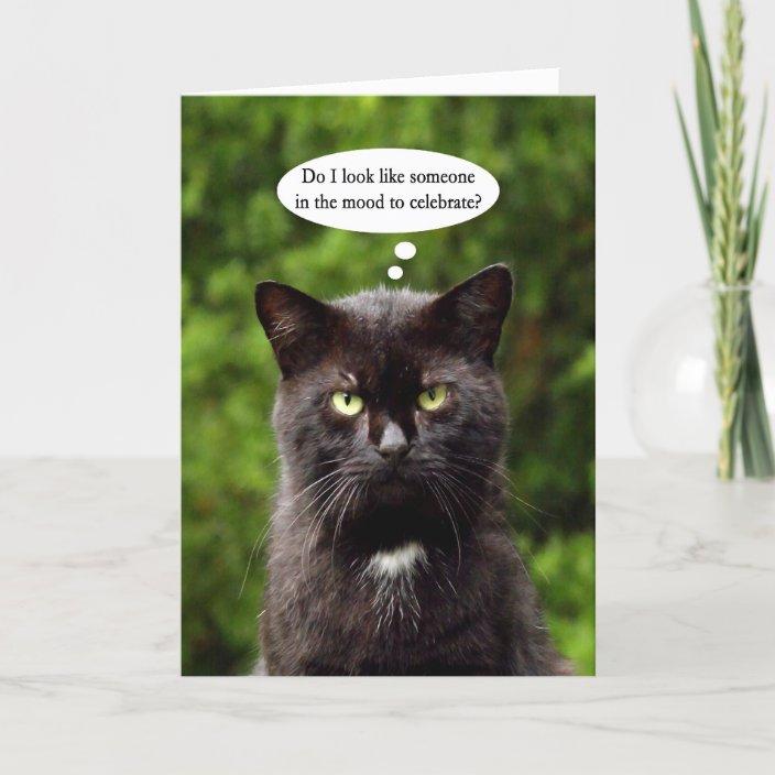 Funny Moody Black Cat Birthday Card Zazzle Com
