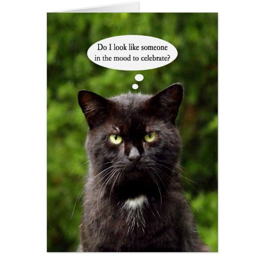 Black Cat Noir