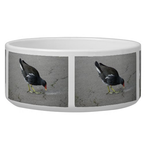 Funny Moorhen Take a Bow Dog Bowl