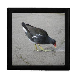 Funny Moorhen Take a Bow Gift Box
