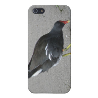 Funny Moorhen Take a Bow  iPhone SE/5/5s Case