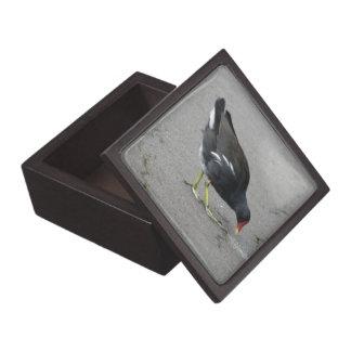 Funny Moorhen Take a Bow Premium Gift Box