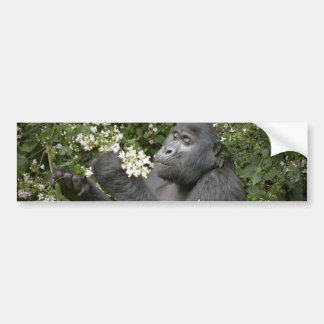 funny mountain gorilla eating flowers bumper stickers