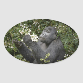 funny mountain gorilla eating flowers oval sticker
