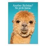 Funny No Problama Llama Birthday Wisdom Card<br><div class='desc'>This llama has the right idea about birthdays...  It&#39;s &quot;No prob-llama&quot; (or no problemo). It&#39;s definitely not as bad as like &quot;The Alpaca-lypse&quot; (or apocalypse). We could all use some punny humor like this on our birthdays. ;)</div>