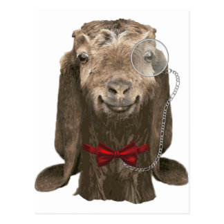 Funny Nubian Goat With Monocle Postcard