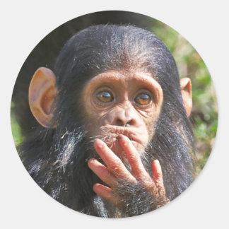 funny of picture young chimpanzee pegatina redonda