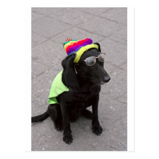 Funny old dog wearing hat and glasses postcard