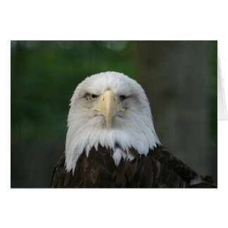 Funny One-Eyed American Bald Eagle Greeting Card