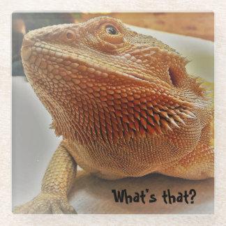 Funny Orange Bearded Dragon Picture Coasters