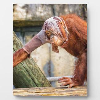 Funny Orangutan Photo Plaque