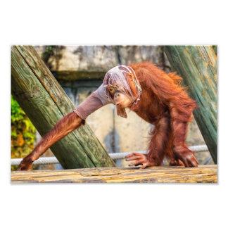 Funny Orangutan Photo Print