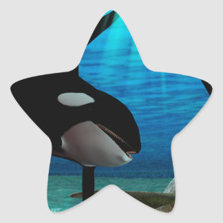 Funny orcas star stickers