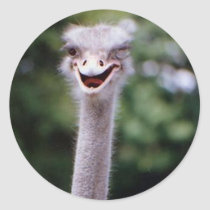 Funny Ostrich Classic Round Sticker