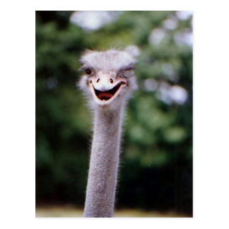 Funny Ostrich Post Card