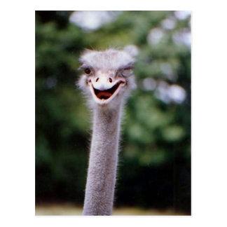 Funny Ostrich Postcard