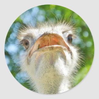Funny Ostrich - Sticker