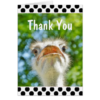 Image result for thank you by an ostrich