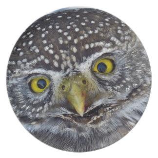 Funny owl portrait dinner plate