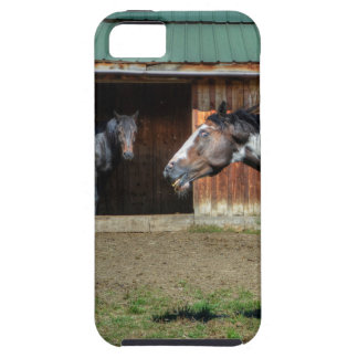 Funny Paint Pinto Grinning Horse Photo Bomb iPhone 5 Cases