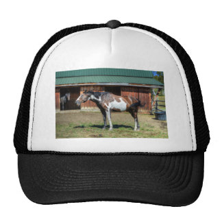 Funny Paint Pinto Grinning Horse Photo Bomb Trucker Hat
