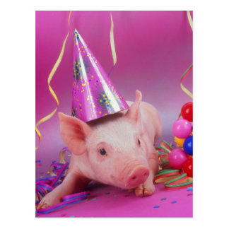 Funny Party Pig Postcard