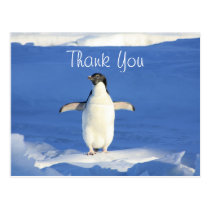Funny Penguin Thank You Postcard