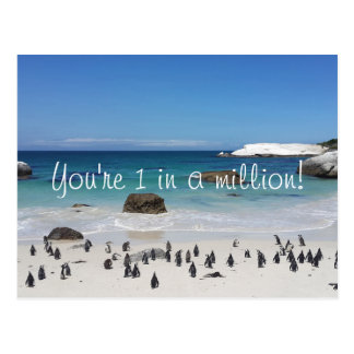 Funny Penguins Thank You Postcard
