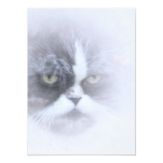 funny persian cat with big eyes card