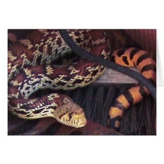 Funny Pest Control Mouser - Sonoran Gopher Snake Card