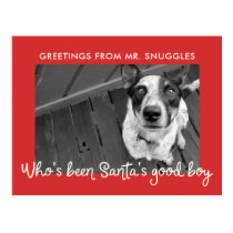 Funny Pet Dog Holiday | Photo Greeting Postcard