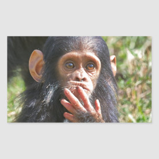 funny picture of young chimpanzee rectangular sticker