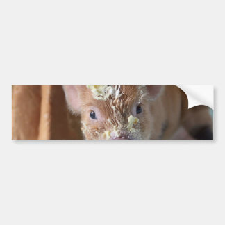 Funny pig and  the cake bumper sticker
