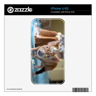 Funny pig and  the cake iPhone 4S skin