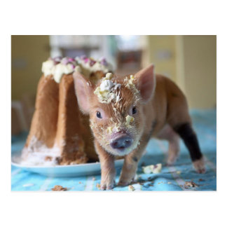 Funny pig and  the cake postcard