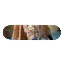 Funny pig and  the cake skateboard deck