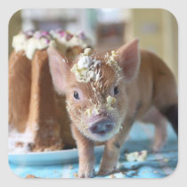 Funny pig and  the cake square sticker