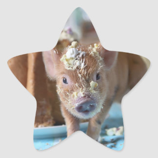 Funny pig and  the cake star sticker